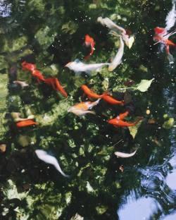 I pesciolini nella fontana dei Giardini Leopardi